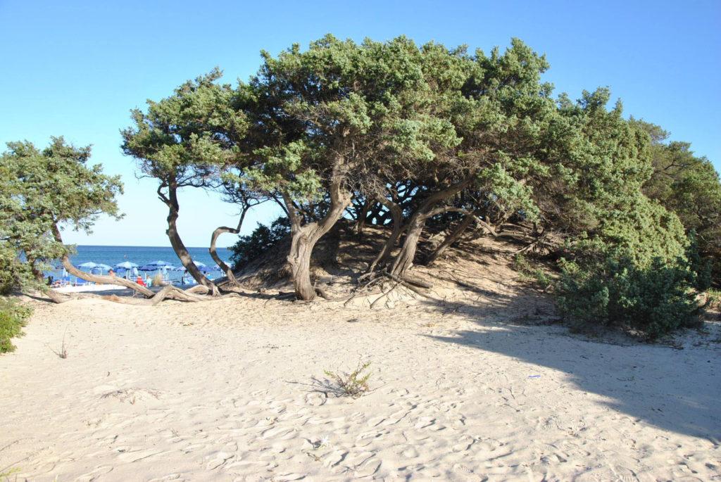 Camping-capo-ferrato-costa-rei-spiaggia.jpg